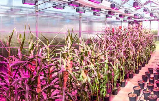 GCCRC - infrastructure - greenhouses - carousel - a