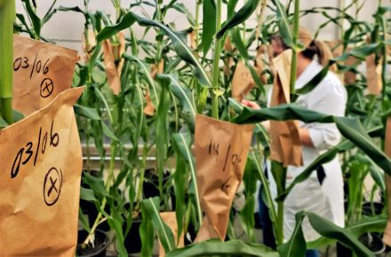 Research search for the maintenance of agriculture in the face of climate change