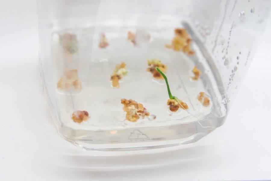 Centro de Pesquisa em Genômica para Mudanças Climáticas oferece curso sobre biotecnologia agrícola